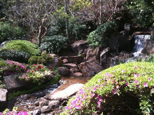 2011 Sept Toowoomba Japanese Gardens 016 (Medium)