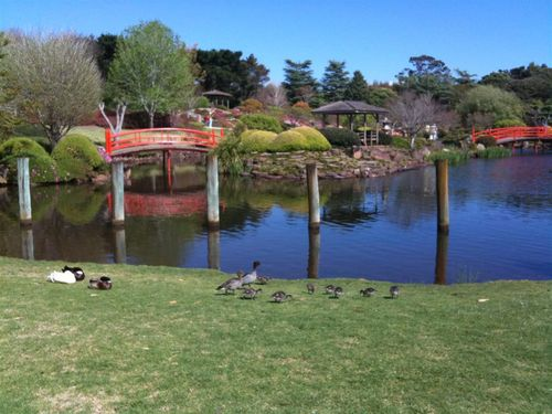 2011 Sept Toowoomba Japanese Gardens 11 (Medium)